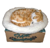 Breathing cat-Orange Tabby (SKU: C03)