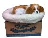 Breathing  dag - King Charles Cavalier (SKU: D23)